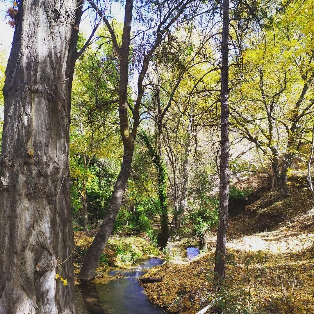 el_bosque_cerca_de_el_batan_alojamientos_rurales