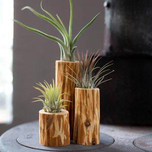 varios_productos_de_madera_de_plantararte